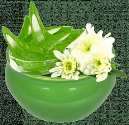 01 organic aloe barbadensis 1