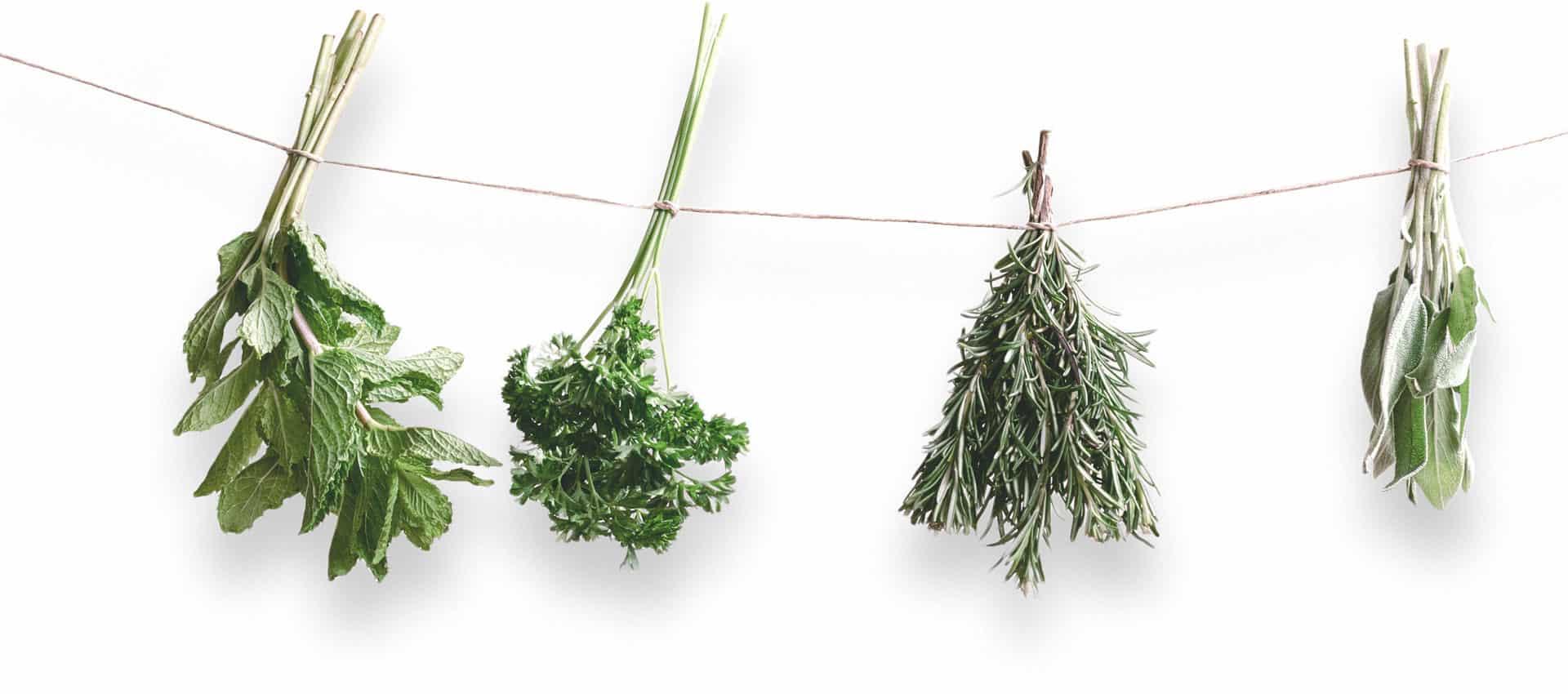 herbal remedy 77