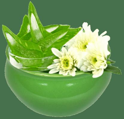 01 organic aloe barbadensis 1 414x400 1 1